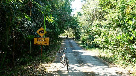 On the way through the jungle to Ao Talo Wao (Koh Tarutao)