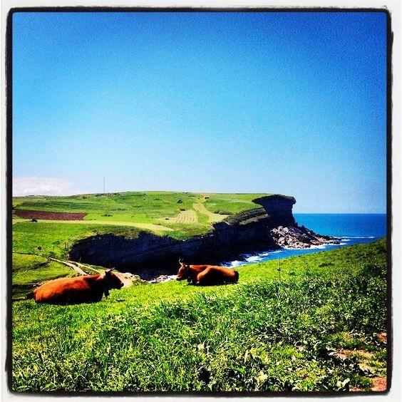 Buenos #paseúcos!! Plácidas están las vacucas ...#cóbreces #cantabria. Foto 4/5 del reto de #animalesdomésticos de @mariasun13. Y foto 2/5 del reto #paseúcos de @rafa_neca. #aprovechamientodefotos #naturaleza_cantabria #cantabriainfinita #estaes_cantabria #ig_cantabria #verdequetequieroverde #cantabriapaisdelagua