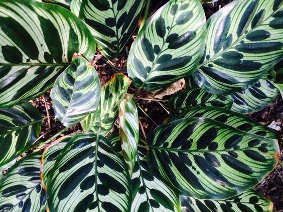 US Botanical Garden - Oct 31st 2015