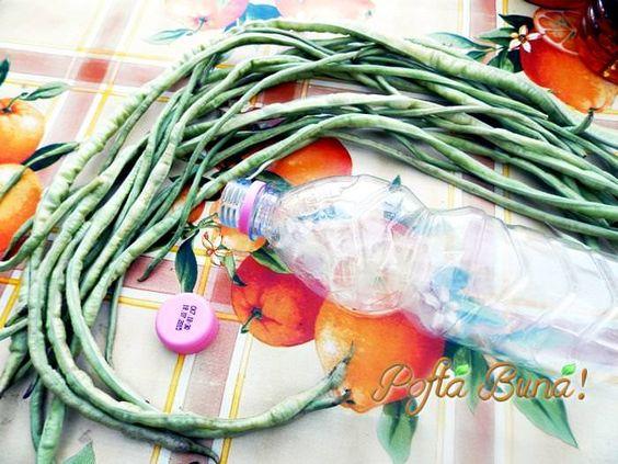 fasole-verde-pentru-iarna-fara-conservanti-pofta-buna-gina-bradea (2)