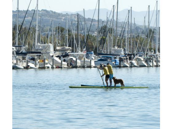 dog on board: Paddles, Events, Water Dogs, Icons, Board, Families, Stand Up, Family Fun