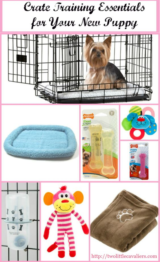 Top 12 Foods Your Dog Should Never Eat Puppy Crate Training And
