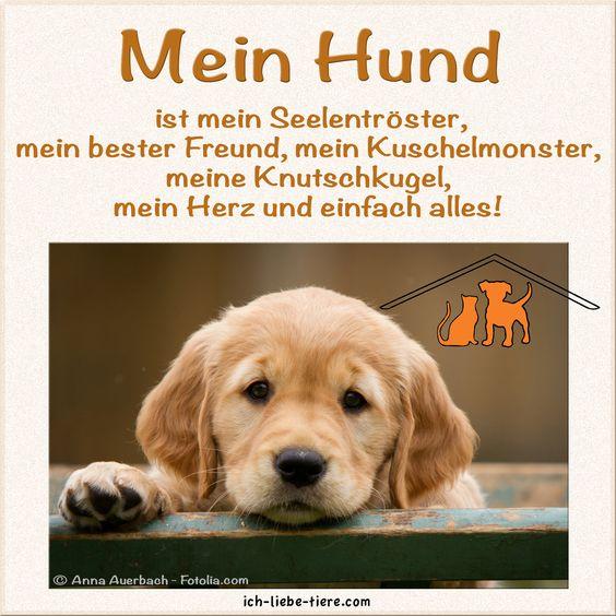 Mein HUND ist mein Seelentröster, mein bester Freund, mein Kuschelmonster, meine Knutschkugel, mein Herz und einfach alles!  http://www.ich-liebe-tiere.com/