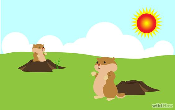 Bildtitel Get Rid of Groundhogs Step 1