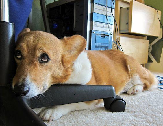 """Mom, pleaseeee, pleasseee, pleaseee....can we go outside????? Ill love you forever!"""