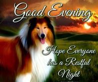 Good Evening Hope Everyone Has A Restful Night: