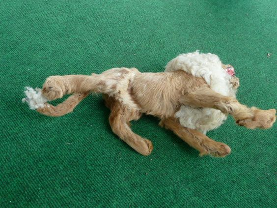 vintage victorian toy taxidermy lion 1800s by joy4charity on Etsy, $175.00
