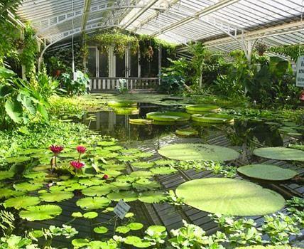 Kurzausflug in die Tropen: in diesen Tropenhäusern erwartet den Besucher eine ganzjährige tropische Pflanzenpracht.