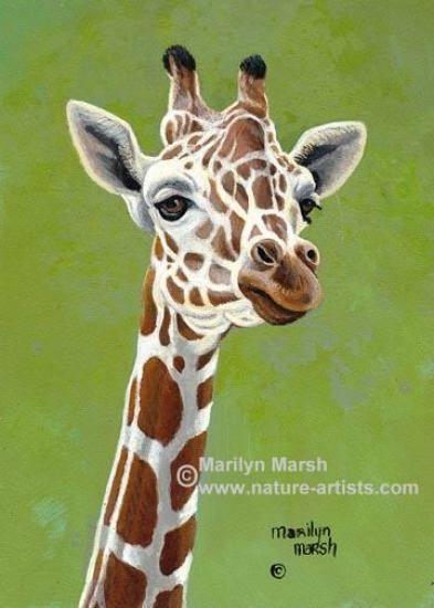 giraffe art | Nature Artists, Paintings of Wildlife Art, Paintings by Marilyn Marsh ...