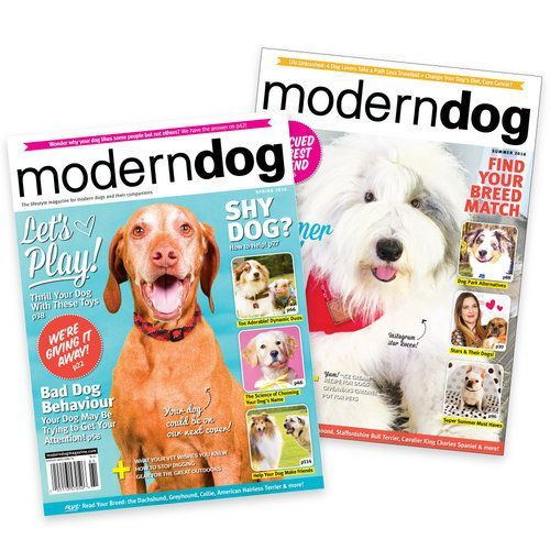 Modern Dog Magazine Subscription Shop Moderndogmagazine Com Modern Dog Shop Modern Dog Modern Dog Magazine Dog Magazine