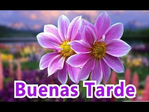Saludos De Buenos Dias Buenas Tardes Y Buenas Noches Con Frases