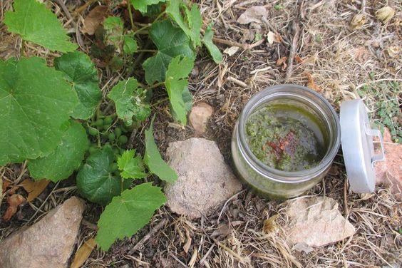 Foraged Grape Leaf Chimichurri Recipe- Paleo, Vegan, With Alternative Options…