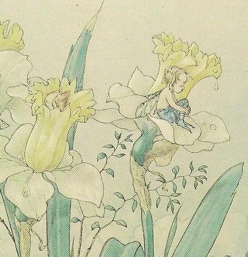 Harold Gaze Flower Fairy Art on Marcel Schurman Vintage Postcard - little fairies in daffodil flowers. $5.00, via Etsy.