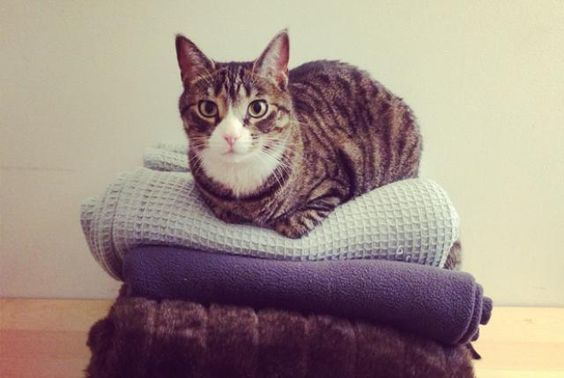 8 Benefits of Being a Cat Owner | Mental Floss