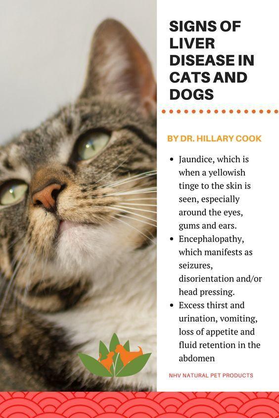 How To Naturally Treat Autoimmune Disease In Cats Liver Disease Holistic Pet Care Cat Diseases