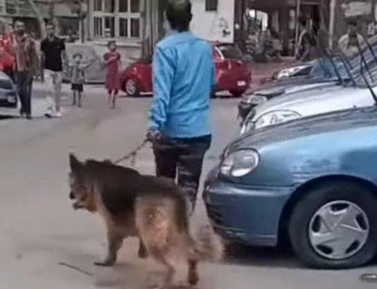 شاهد بلطجي يروع الأهالي بكلب مفترس وساطور في مصر Https Ift Tt 2ggjeoo Https Ift Tt 2gy2gep Husky Dogs Animals