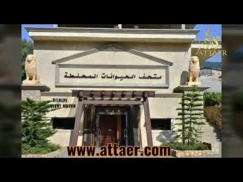 متحف الحيوانات المحنطة في بنشعي سياحة لبنان تعرفوا على متحف الحيوانات المحنطة في لبنان