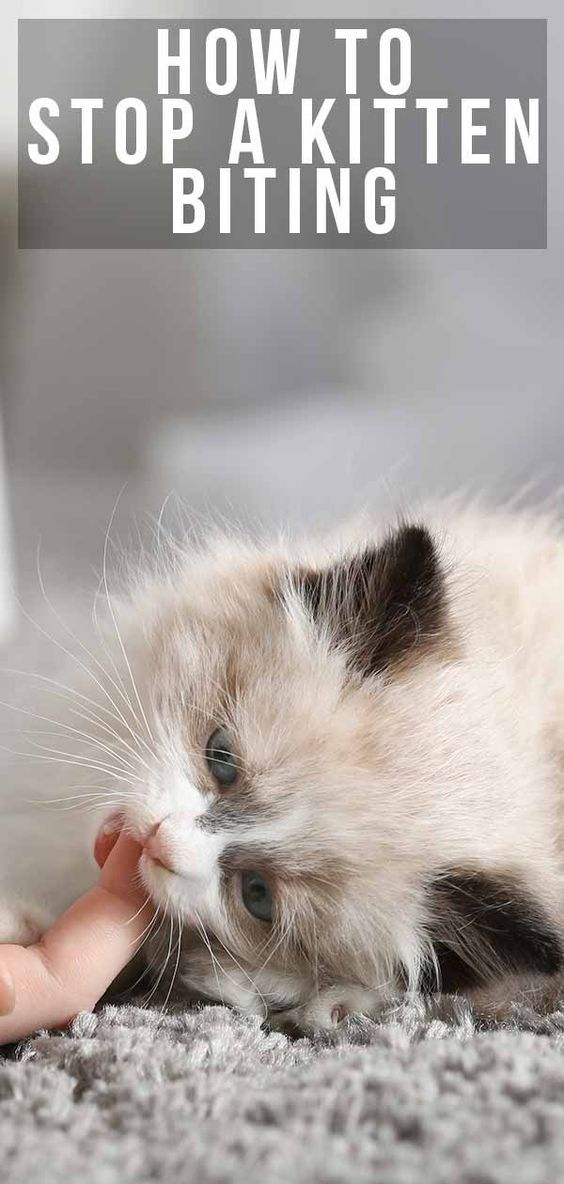 5 Simple Tips To Stop Your Kitten Biting Kitten Biting Pet Kitten Care Kitten Care