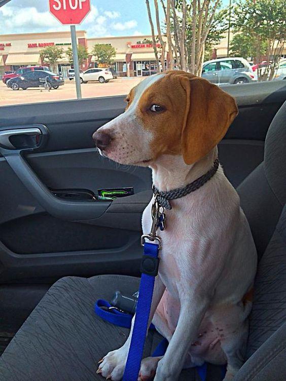 20 moments hilarants où des chiens ont réalisé qu'ils allaient chez le vétérinaire et non au parc