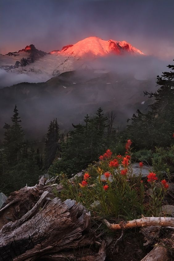 Mt. Rainier sunrise - Great photos from around the West - Sunset