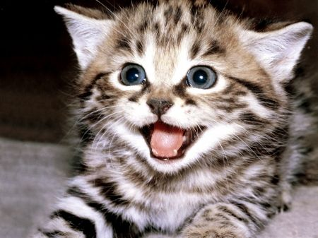 smiling kitten - adorable, amazing, animal, animals, awesome, beautiful, cat, cats, cute, fantastic, great, kitten, kittens, kitty, marvellous, nice, outstanding, picture, pretty, SkyPhoenixX1, smile, smiling kitten, stunning, super, sweet, wallpaper, wonderful