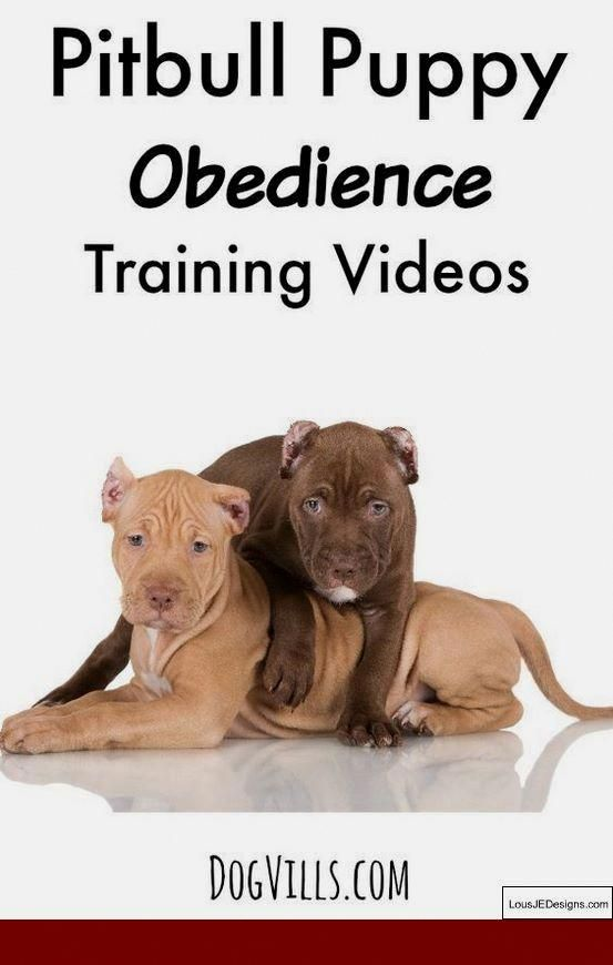 Sharp Troubleshot Dog Training How To Start Your Free Trial