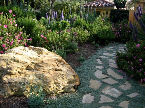 Dymondia is a wonderful ground cover that fits into the nooks and crannies of your stone pathway.