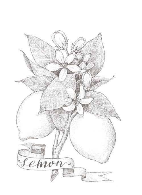 Botanical Watercolor Coloring Book Botanical Flower Plant