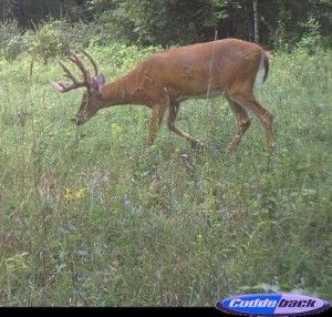 4 Ways to Guess the Age of a Buck on http://www.deeranddeerhunting.com