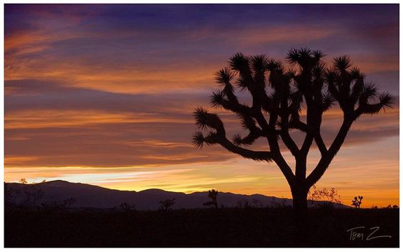 By Tom Zaczyk --> Palm Desert, California. #KelbyOneSunset