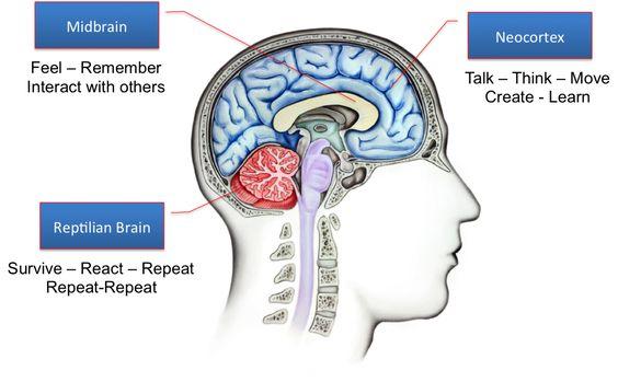neocortex - reptilian brain