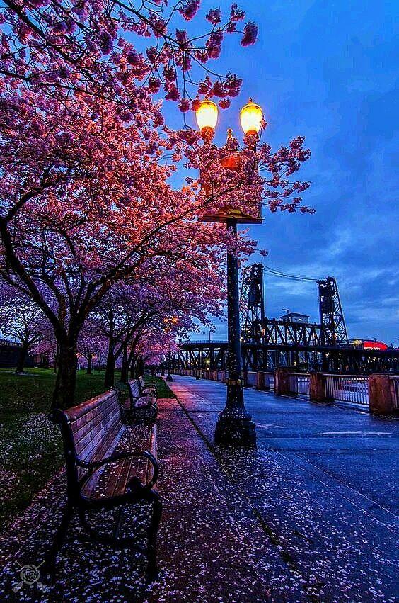 1 Spring Evening Portland Oregon Photography Oregon Photography Nature Photography