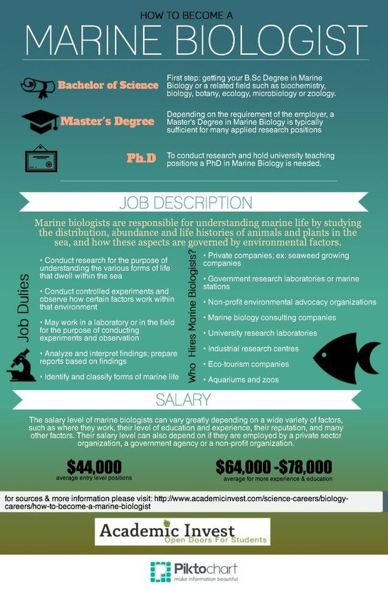 How to be a Marine Biologist Learn About Marine Biology Careers - marine biologist job description
