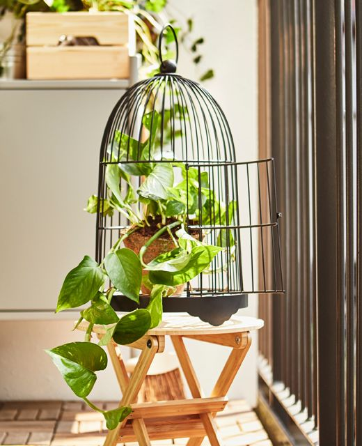 A decorative birdcage displays a potted vine plant.