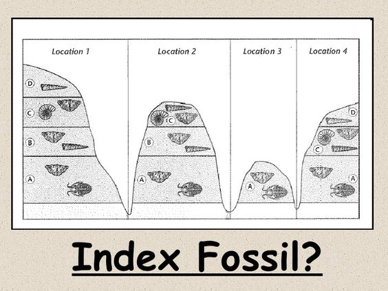 index fossils activity index fossils activity science stuff pinterest activities and fossil. Black Bedroom Furniture Sets. Home Design Ideas
