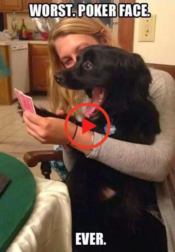 Can T Stop Laughing 12 Funny Dog Memes Funny Dog Memes Dog Memes Clean Cat And Dog Memes