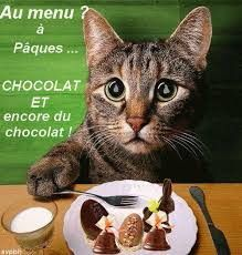 Vous ne le savez sans doûte pas , mais votre chat à Pâques il ne pense que à ça ! ^3^