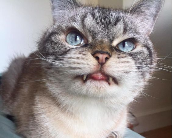 """This Cat's Interesting Facial Features Make It Appear Like """"Vampire Kitty""""… And We Love It!"""
