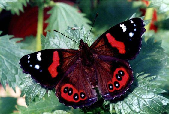 superbes papillons! Ca27e017e00e57e27af2069481e8024c