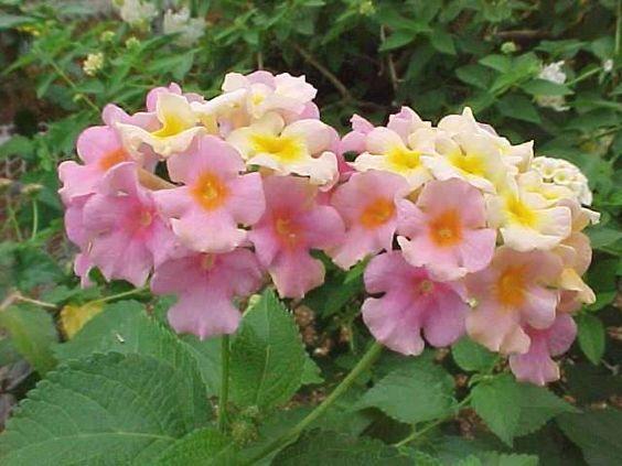 Gardens Sun And Orange Pink On Pinterest