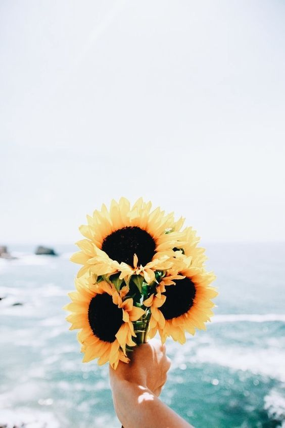 30 Super Pretty Sunflower Iphone Wallpapers Crushappy Blog Iphone Wallpaper Happy A Sunflower Iphone Wallpaper Cute Tumblr Wallpaper Sunflower Wallpaper