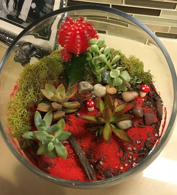 Terrariums cactus succulents by SignatureSucculents on Etsy