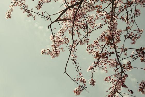 NATURE by Cristina Pye