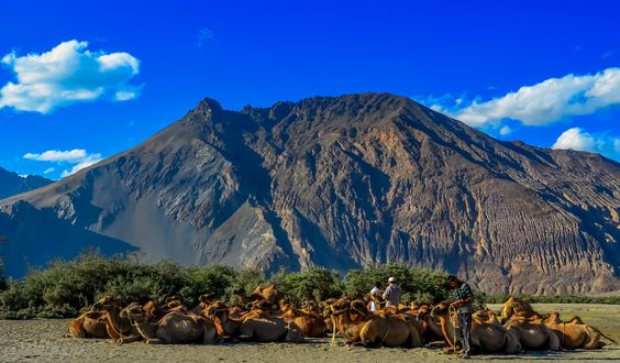 Daily Life@Nubra Valley