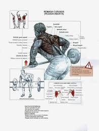 Resultado de imagem para exercicios para grupos musculares