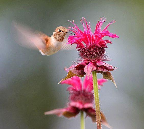 Beautiful Hummingbird by Denis Bernabini