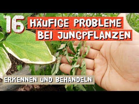 16 Haufige Probleme Bei Jungpflanzen Brauner Blattrand Gelbe Blatter Uvm Erkennen Und Beheben Youtube Pflanzen Pflanzen Erkennen Bio Saatgut