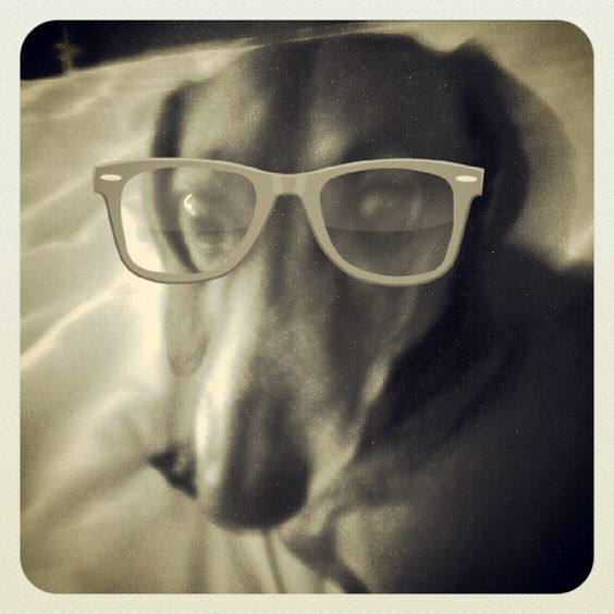 What an intelligent looking wiener. Photo from the Instacanvas gallery for miss_eryn_. #photography #art #decor #dogs #pets