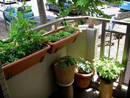 8 Lively Tricks English Garden Ideas Rustic Pretty Backyard Garden Raised Beds Garden Ideas Backyard In 2020 Patio Garden Small Balcony Garden Small Backyard Gardens