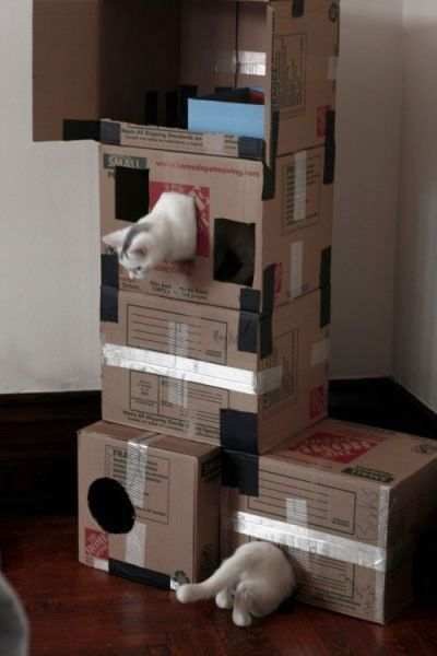 Cat playing Portal :) Wow, I keep looking at commercial cat trees, but I bet they'd like this just as well, if not better!